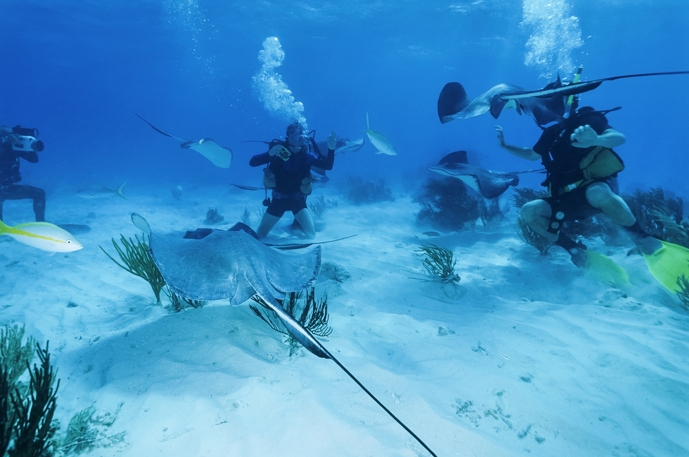 The Top 10 Caribbean Islands For Scuba Diving